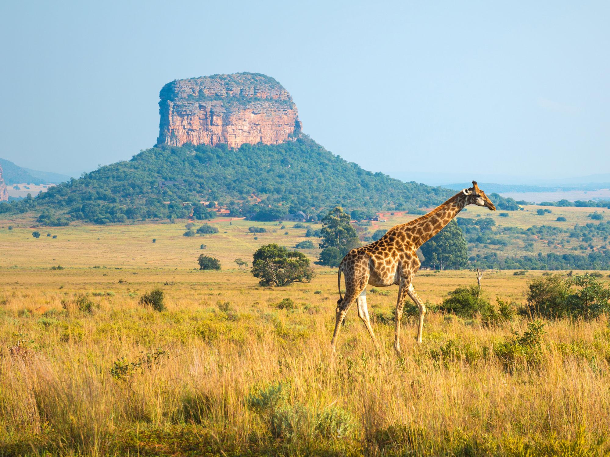 sejours afrique du sud
